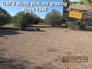 What the federal lands bureaucracy and environmental error produce. . .   Photo Credit: Dan Dagget