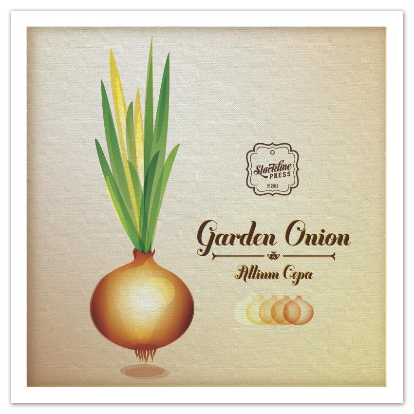 slacklinepress-portfolio-vector-onion.jpg