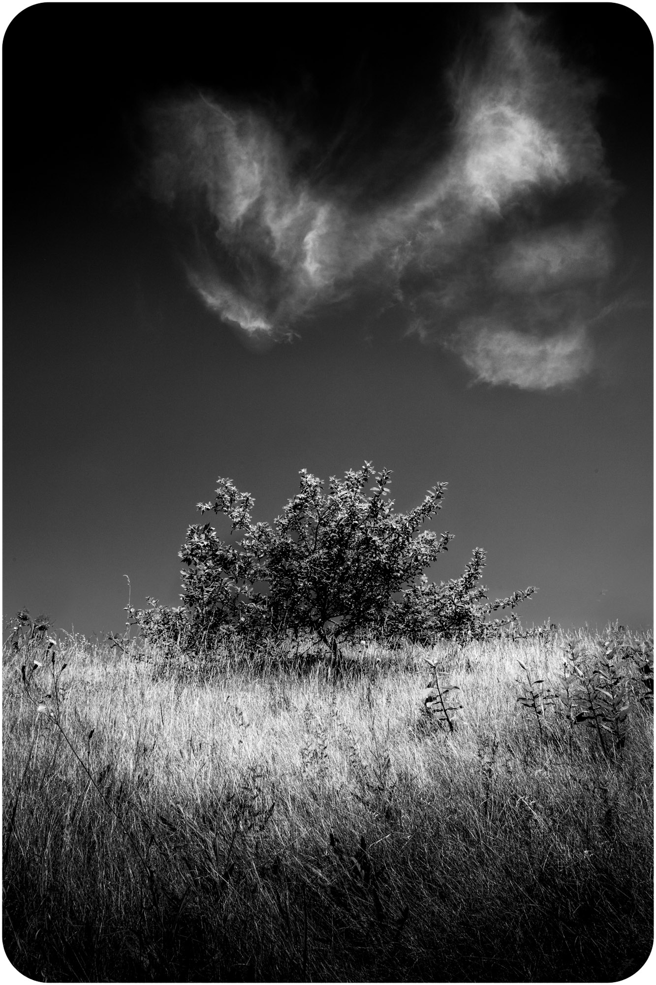 056 Wolfinger_Ezra-1.jpg