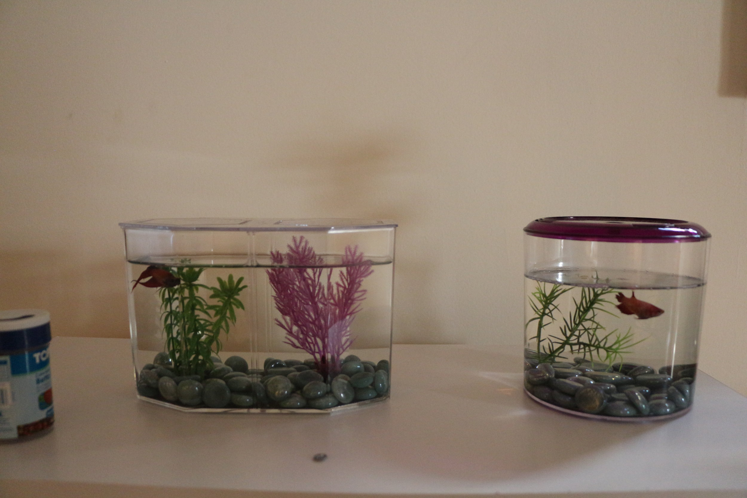 Our fish! Ron Swanson (L) and Leslie Knope (R)