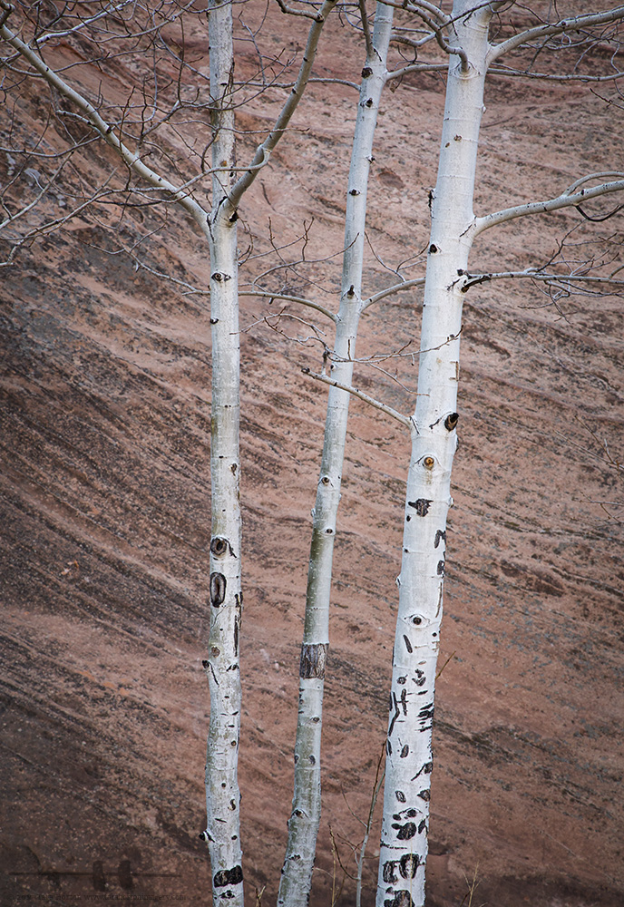 Aspen and Red Rock, 2017
