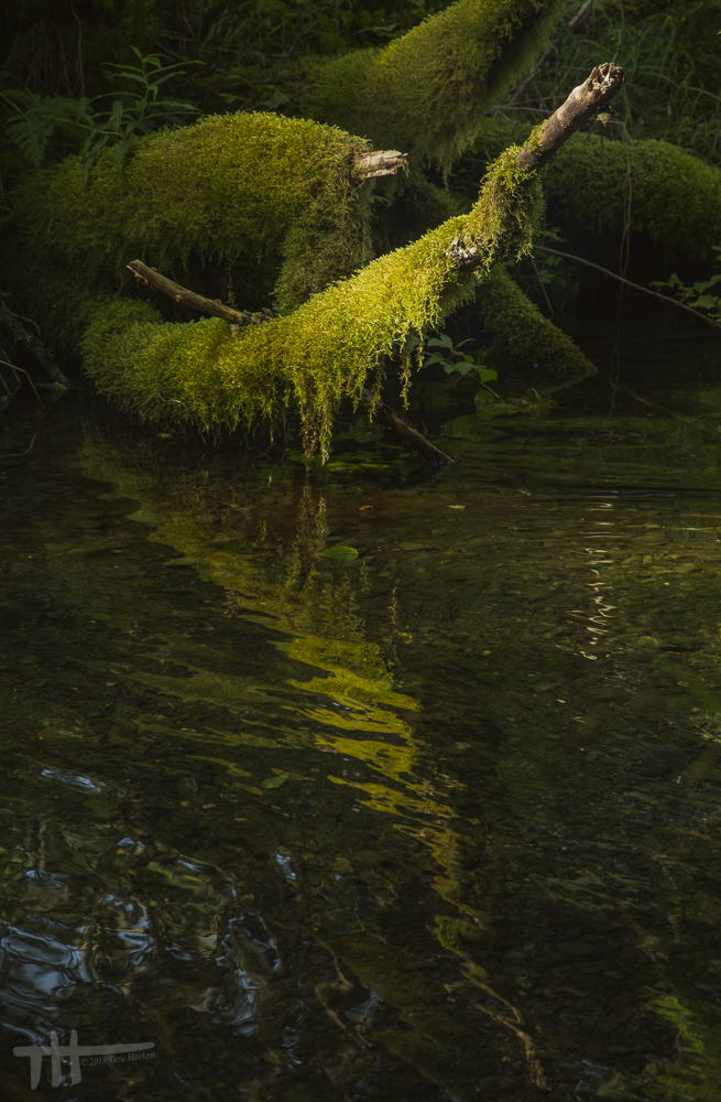 Mutuality of Moss and Water, 2018