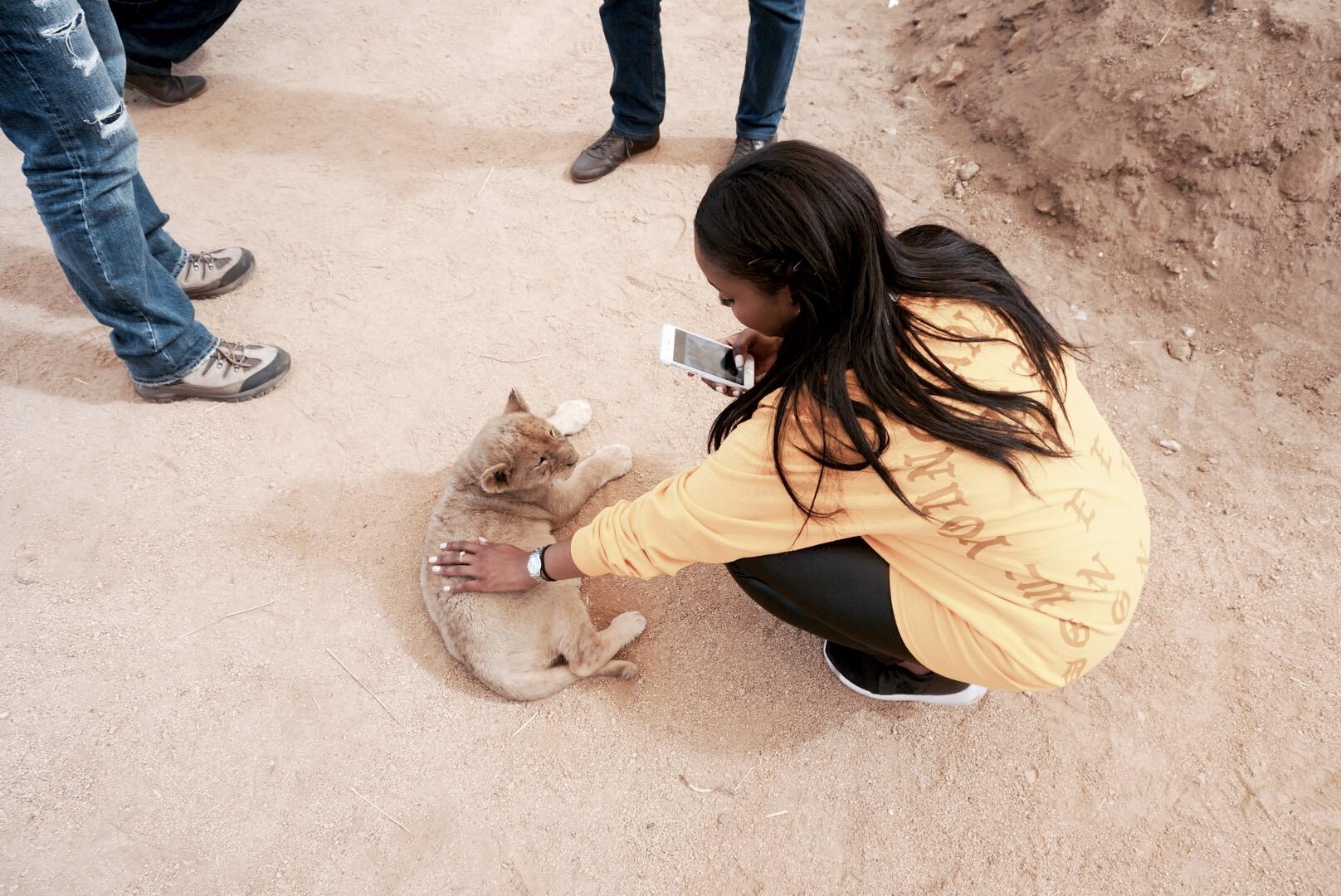 Lion Park, Gauteng