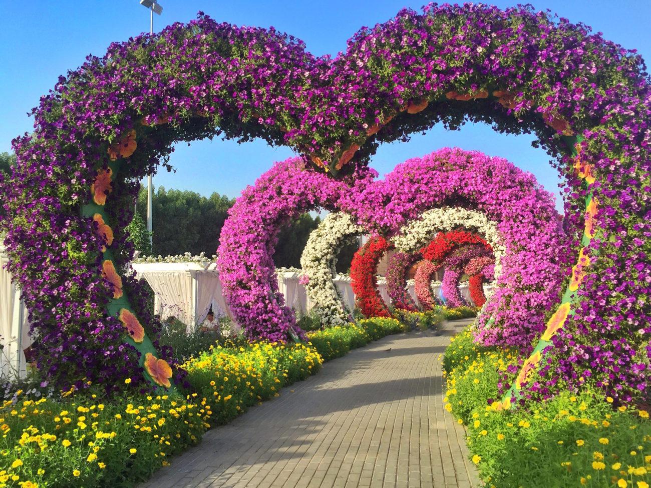 Miracle-Gardens-Packs-Light4-e1486745971109.jpg
