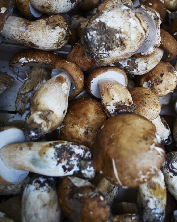 I funghi. Mercato Testaccio.
