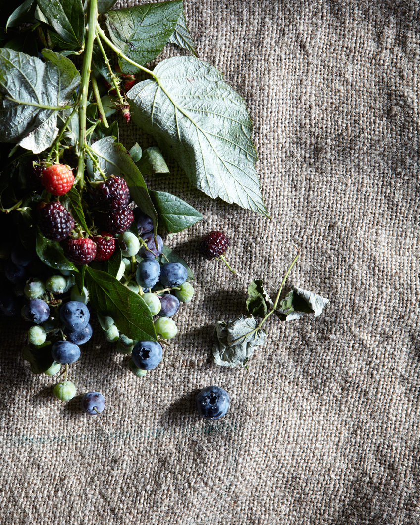 120624_FLYING_FOX_BLUEBERRIES_SM-0267.jpg