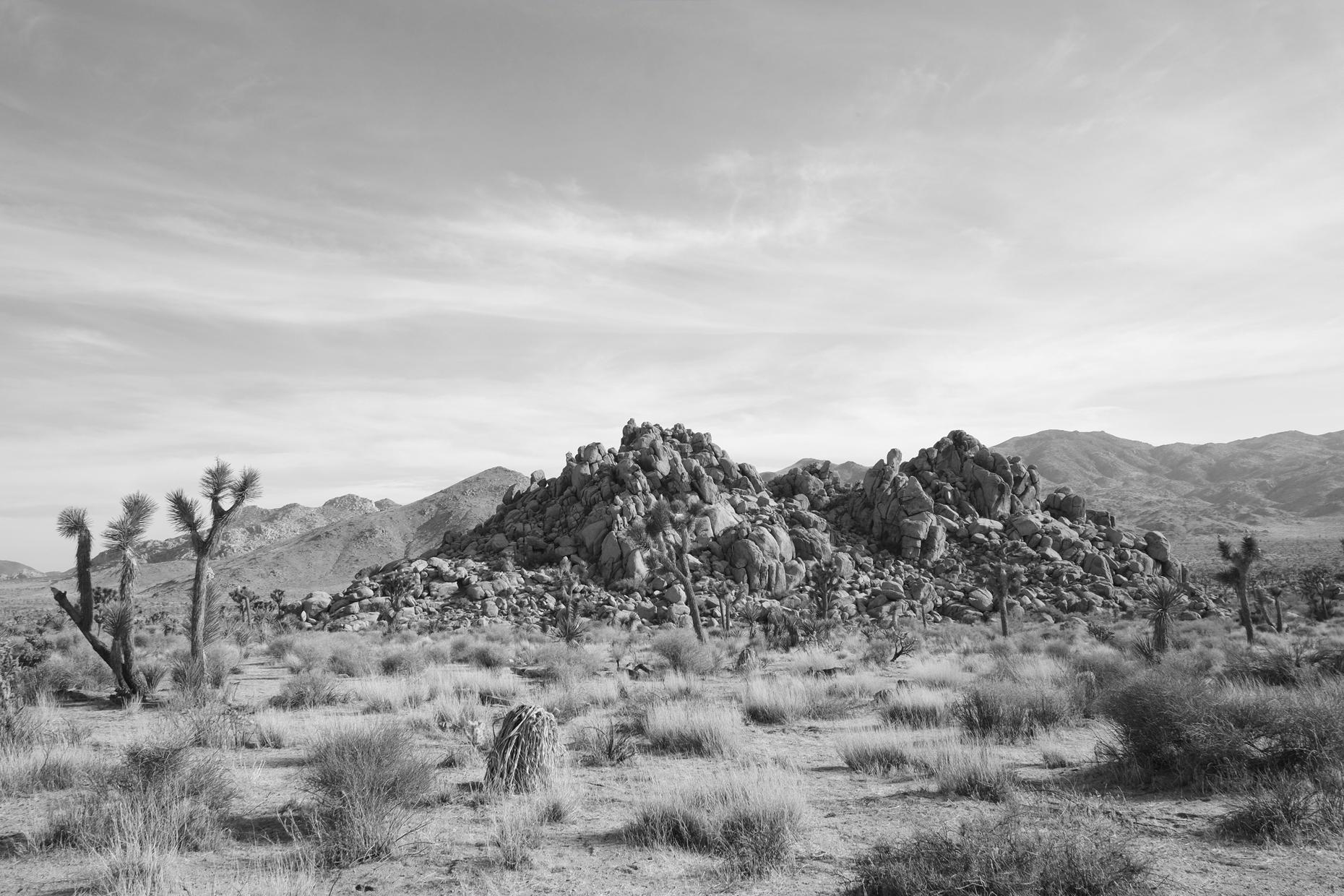 Yucca Valley Joshua Tree National Park