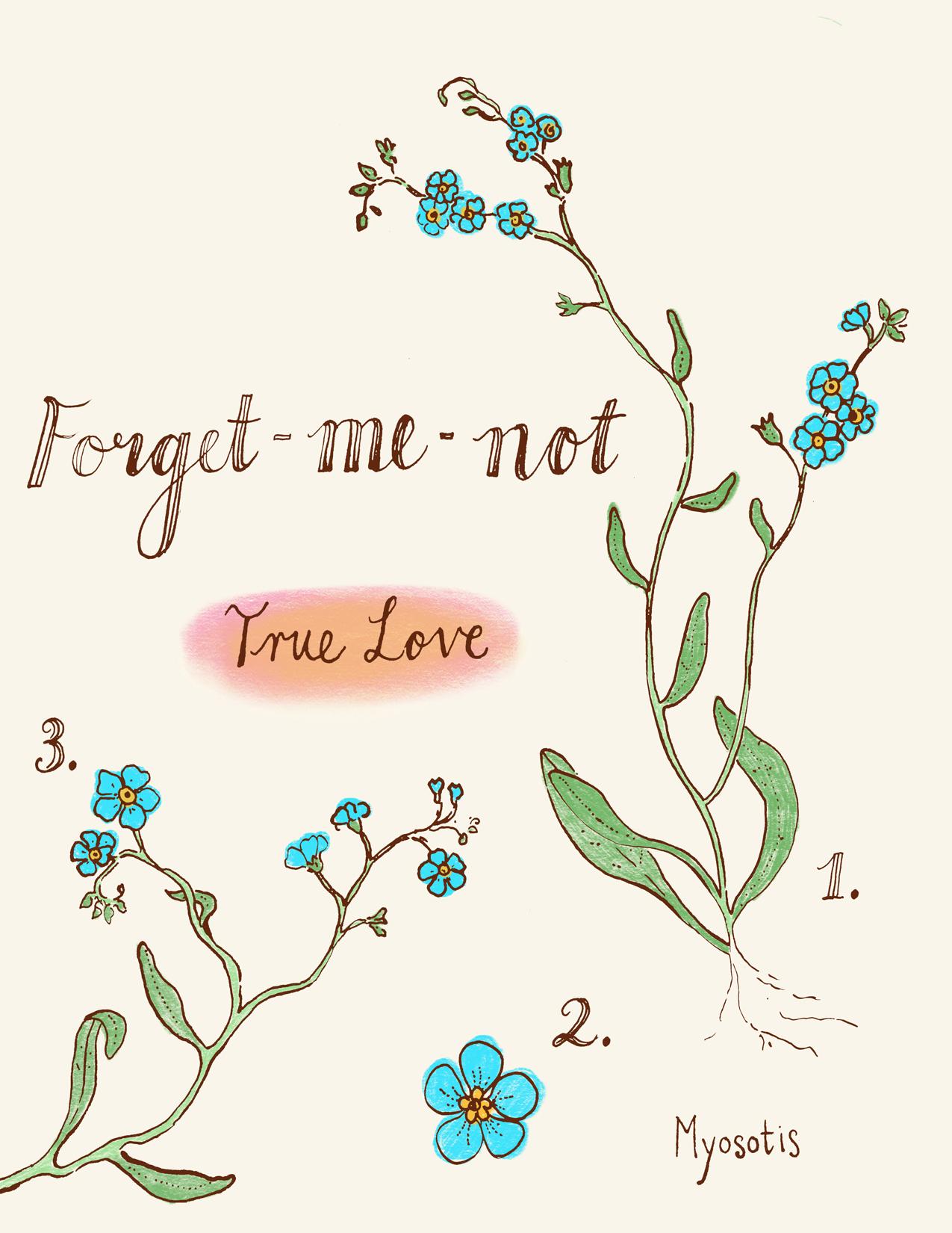 TRINA_PP_Botanical_ForgetMeNot.jpg