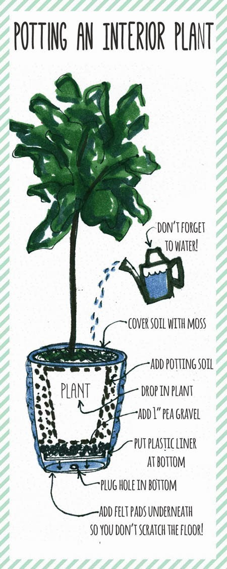 Tips For A Thriving Fiddle Leaf Fig Tree Gathered Living
