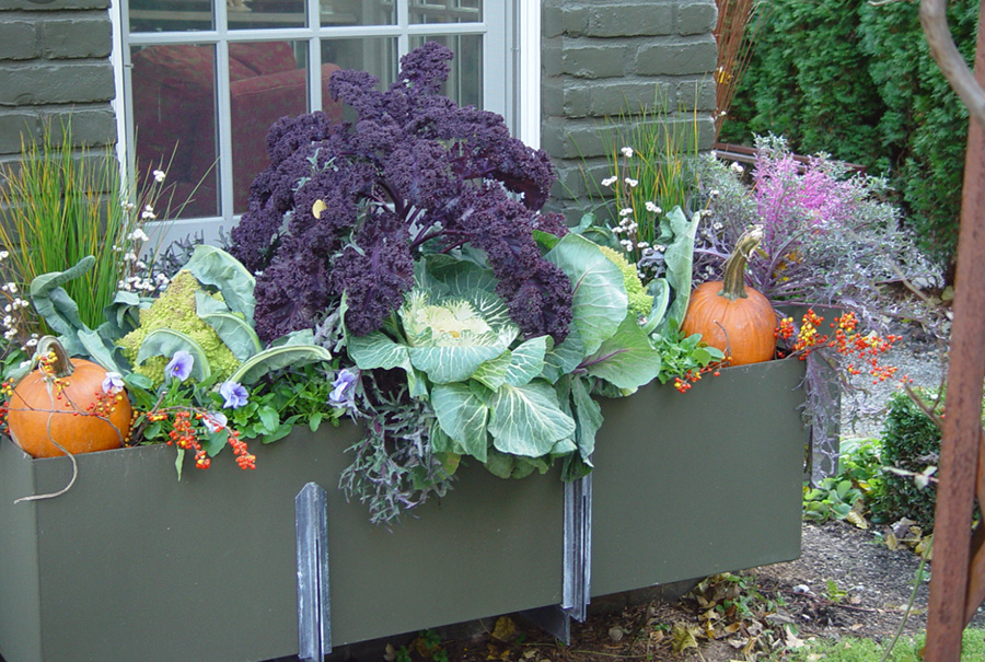from the blog of  Deborah Silver, Dirt Simple  - window box with pumpkins, cabbage, purple kale. I love the cement green of the box and the greens of the plantings. They look so festive.