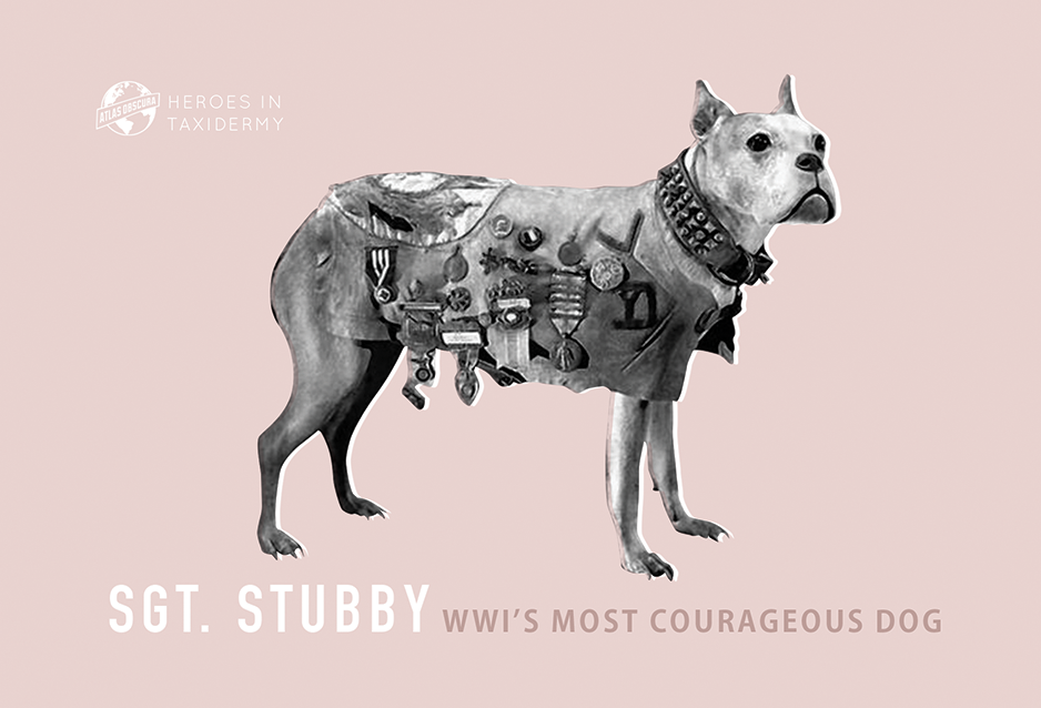 Sgt. Stubby, WWI's Most Courageous Dog