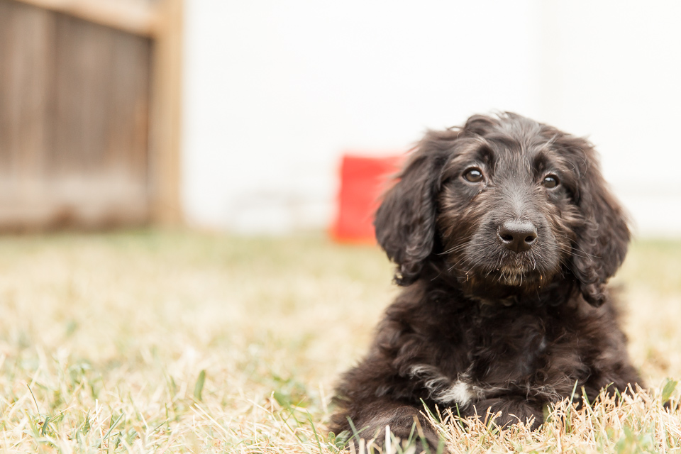 If you're asking me if I took 137 professional photos of my puppy this morning, then the answer is yes. Yes I did.