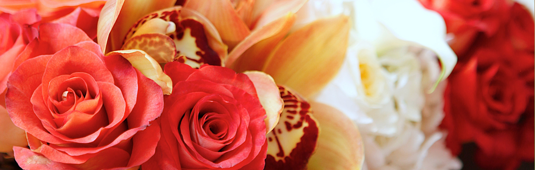 primrose-floral-design-hp5.jpg