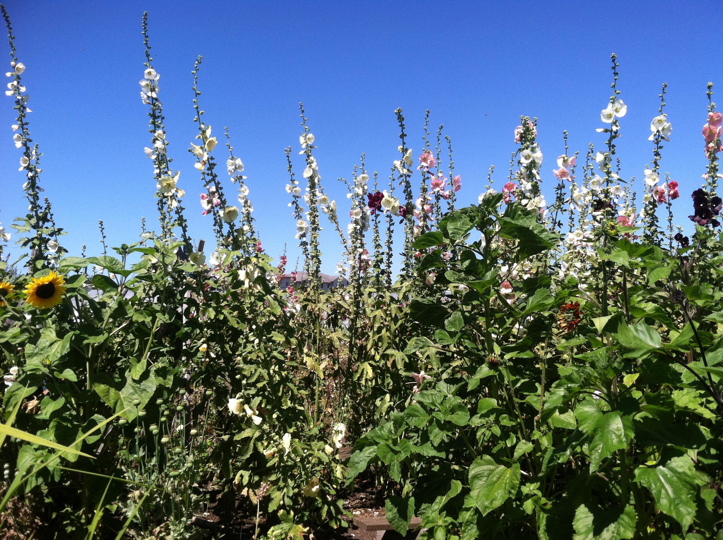 Secret Garden at Colinwoof Farm, Port Townsend WA