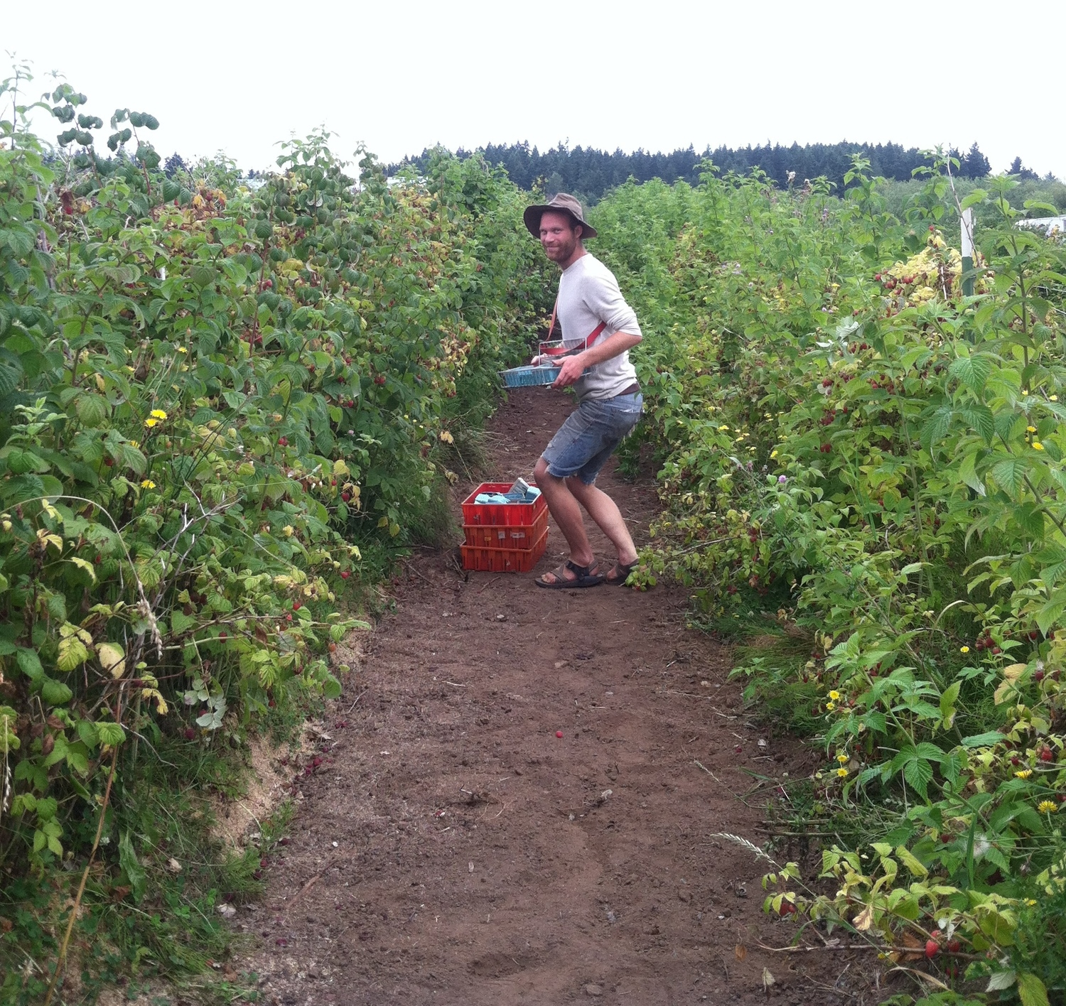 Are those raspberries in your basket or are you just happy to see me? With Chris Faroe at Spring Rain Farm PT WA.