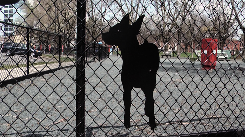 Lulu's Dog Silhouette / Gateway Dog Park / Minneapolis, Minnesota / May 14th, 2014 / Still Photo by Michael Johnson