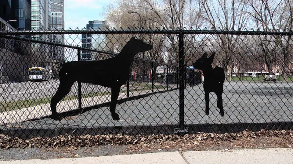 Ruby and Lulu Dog Silhouettes / Gateway Dog Park / Minneapolis, Minnesota / May 14th, 2014 / Still Photo by Michael Johnson