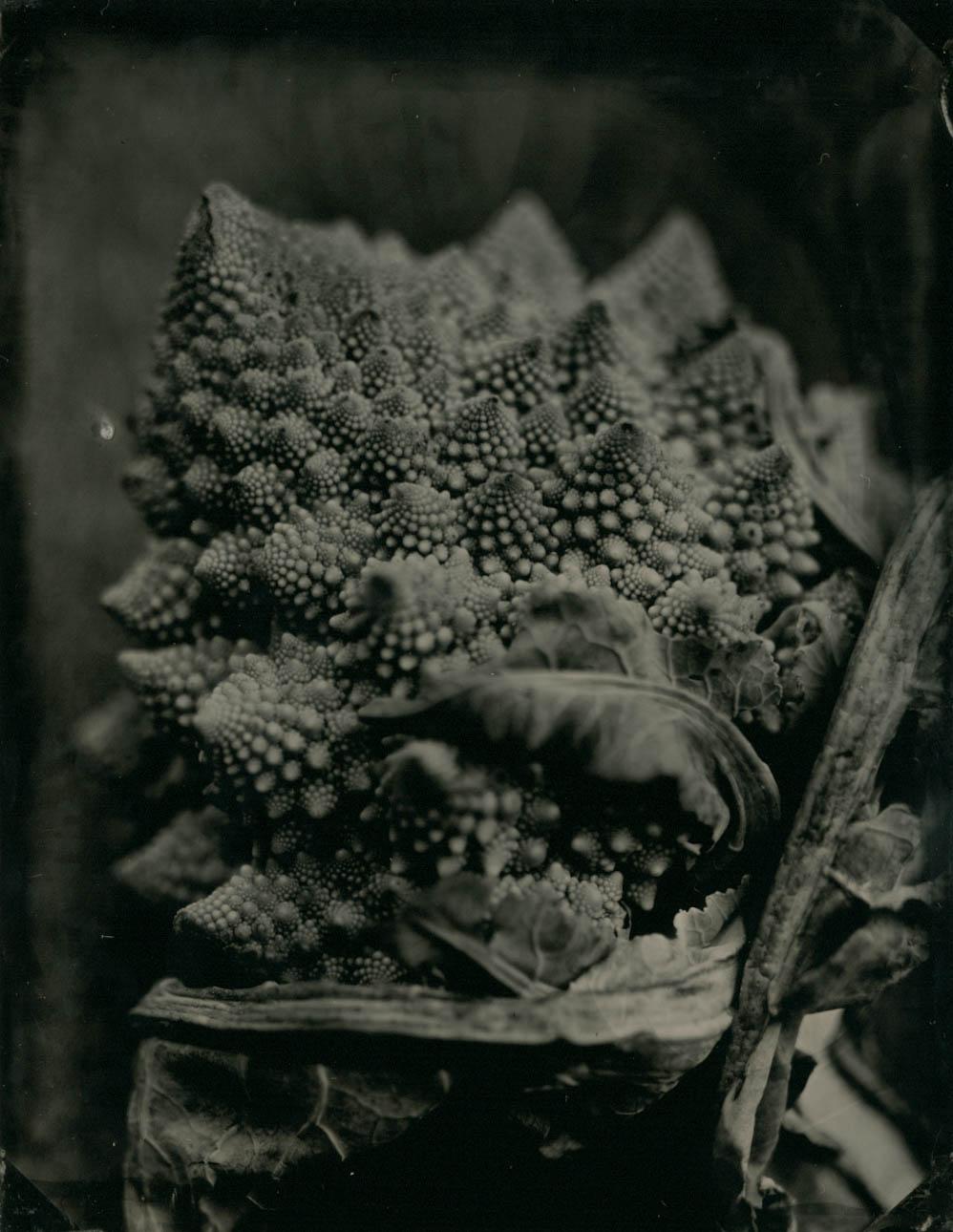 brocoflower.jpg