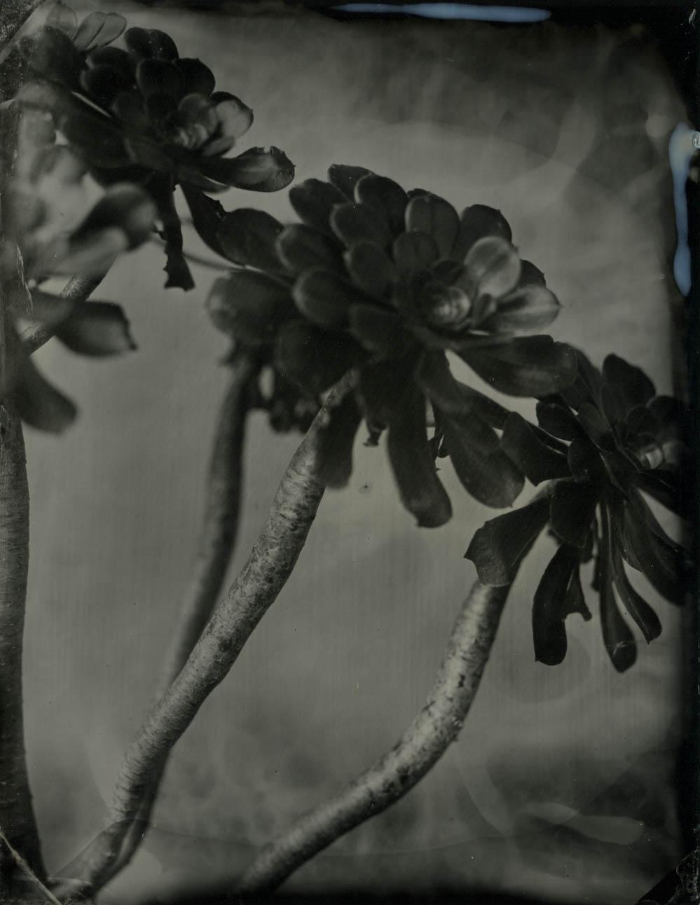 drifting succulent 1.jpg