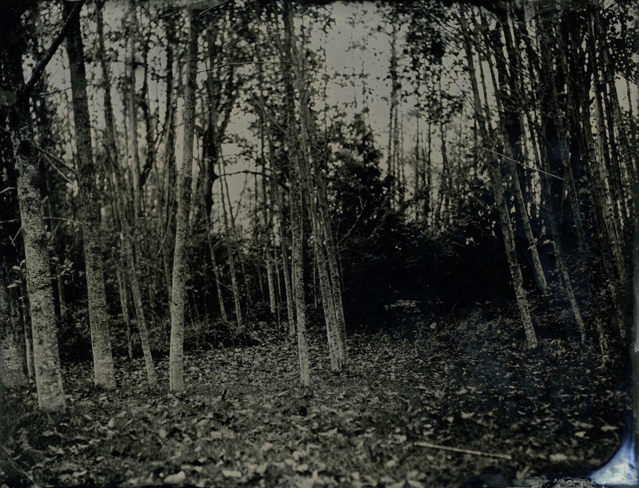 alder grove 1.jpg