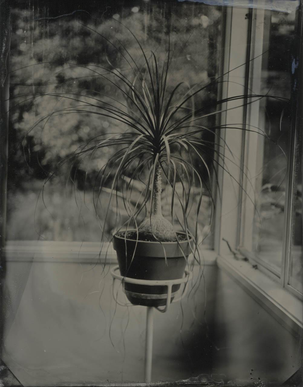 bottle palm.jpg