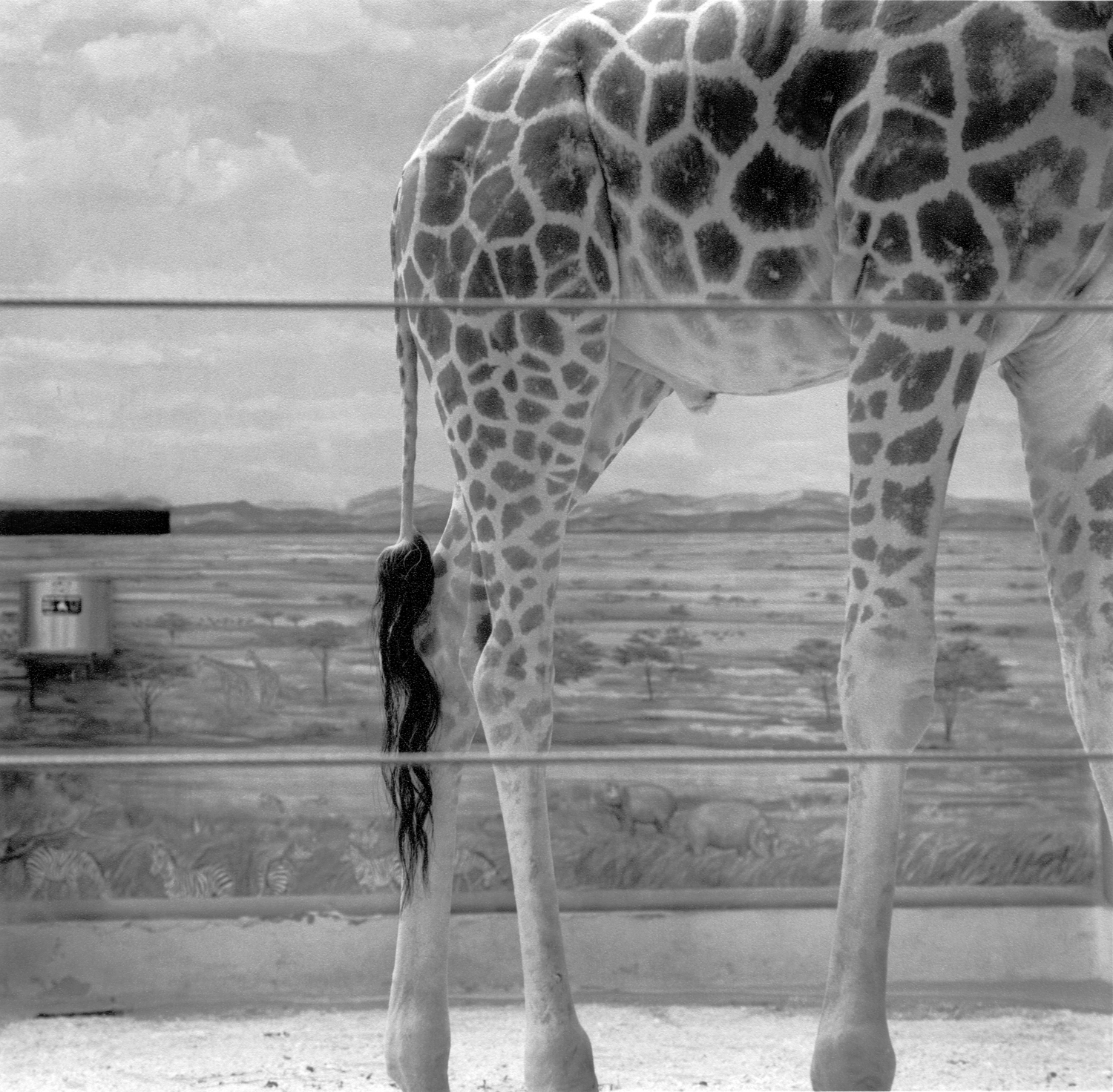 giraffe_and_diarama.jpg