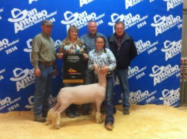 2014 Reserve Champion Southdown at the San Antonio Livestock Show & Rodeo   Shown by Emily Brite