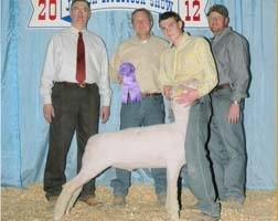 2012 Champion Finewool at the Hill Country District Show   Shown by Gabe Jennings