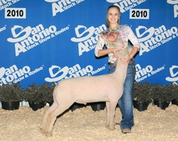 2010 First Place Southdown in Class 4 at San Antonio    Shown by Brittany Sanders