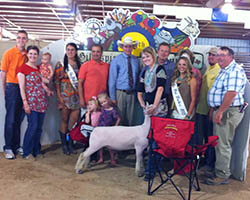 2013 Supreme Champion Ewe at the 125th Gillespie County Fair   Shown by Bryleigh Beyers