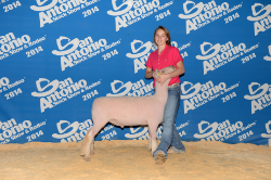 2014 Second Place Heavy Weight at San Antonio   Shown by Delaney McLean