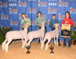 2014 Houston Livestock Show & Rodeo - Champion Finewool (Middle Weight), First Place Heavy, Second Place Heavy