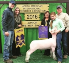2016 Champion Southdown at the North American Livestock Exposition   Shown by Carlye Winfrey