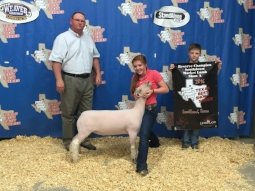 2016 Reserve Champion Southdown at TBSS Levelland Show A   Shown by Carlye Winfrey
