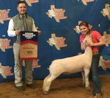 2016 Reserve Southdown at TBSS Sweetwater Ring B   Shown by Carlye Winfrey