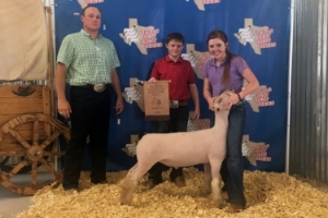 2017 Reserve Champion Southdown  in Rings A & B of the first Texas Best Show in Granbury   Shown by Carlye Winfrey