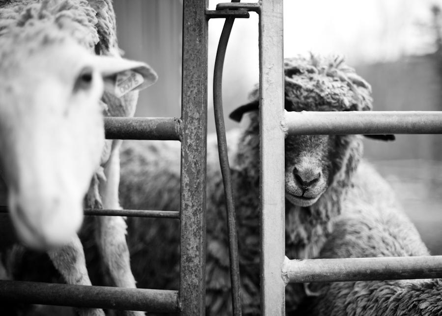 East Hill Farm-024.jpg