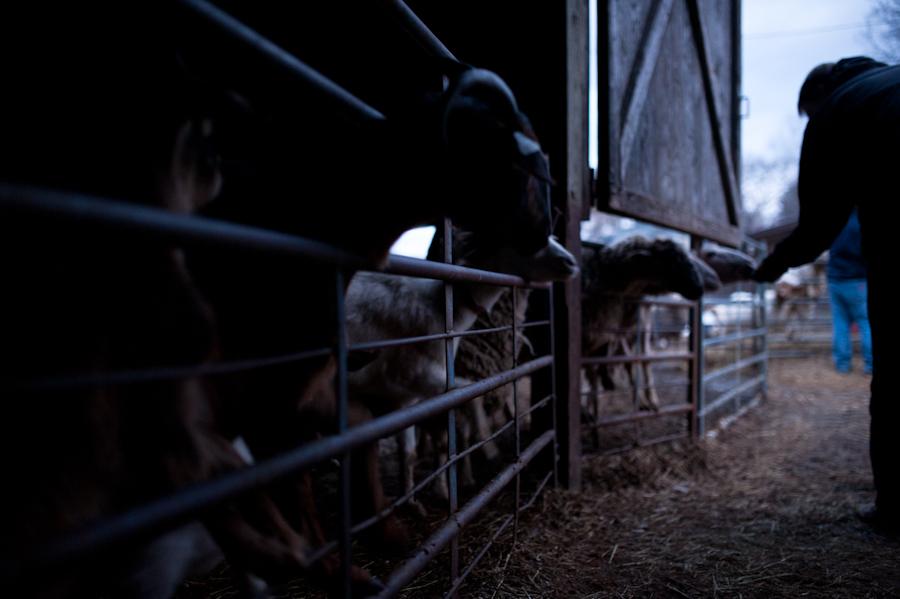 East Hill Farm-381.jpg