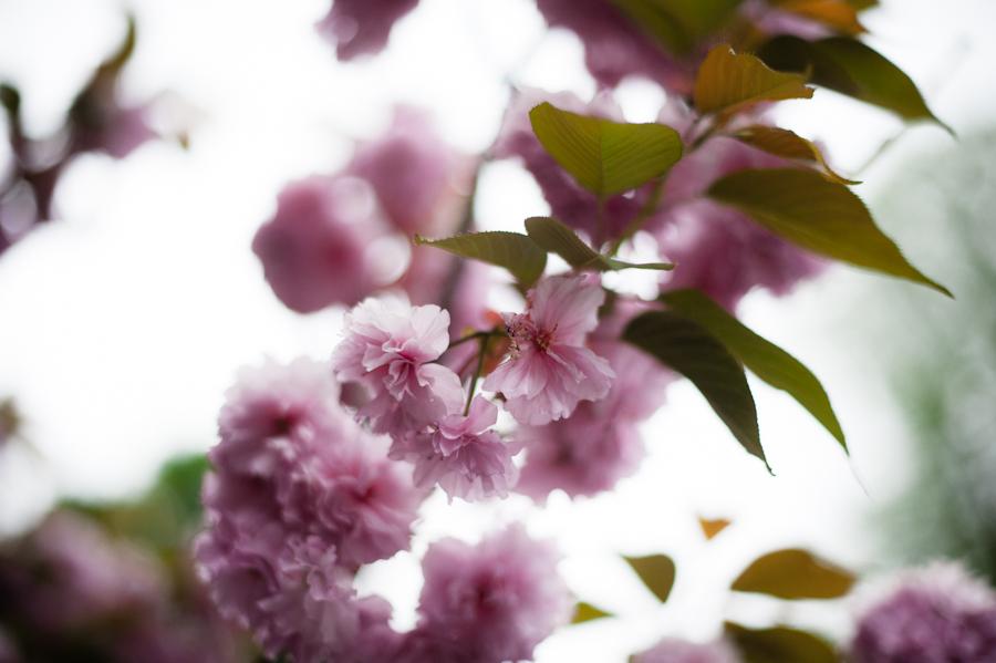 Cherry Tree-014.jpg