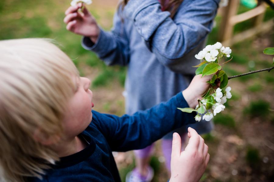Pear Blossoms-021.jpg