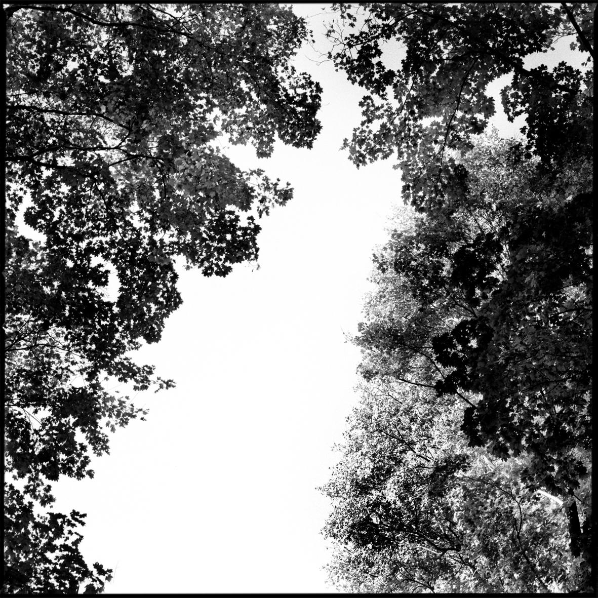 overhead.jpg