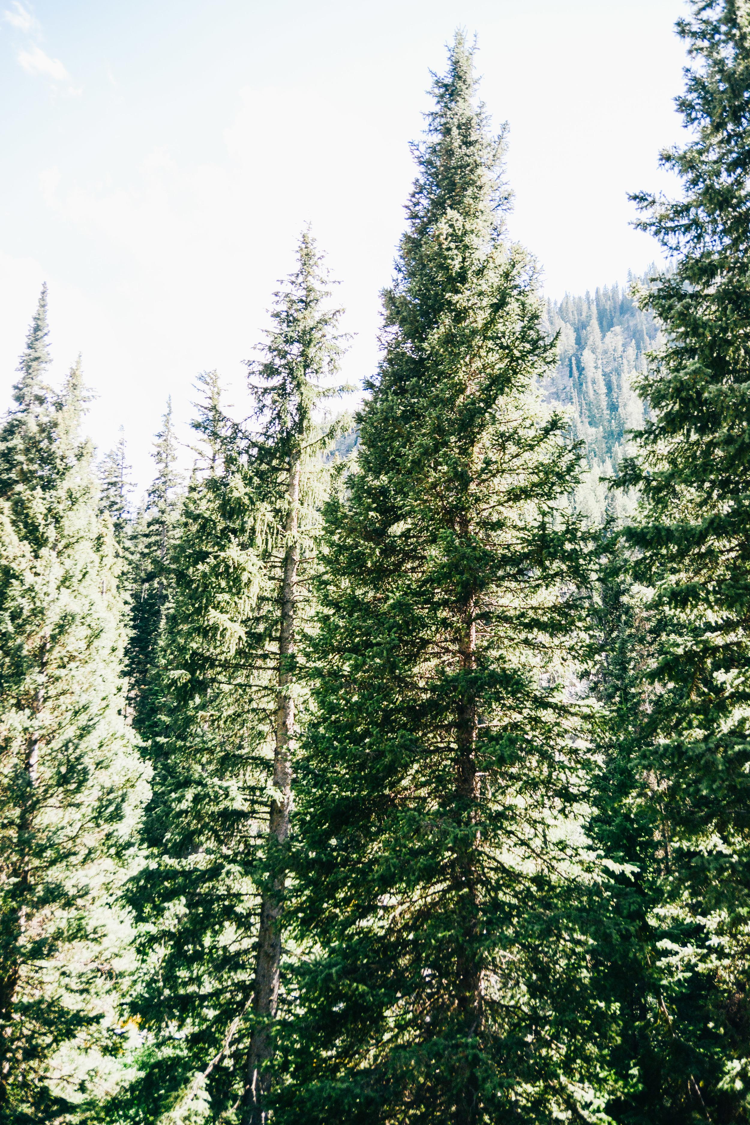 Wyoming-245.jpg