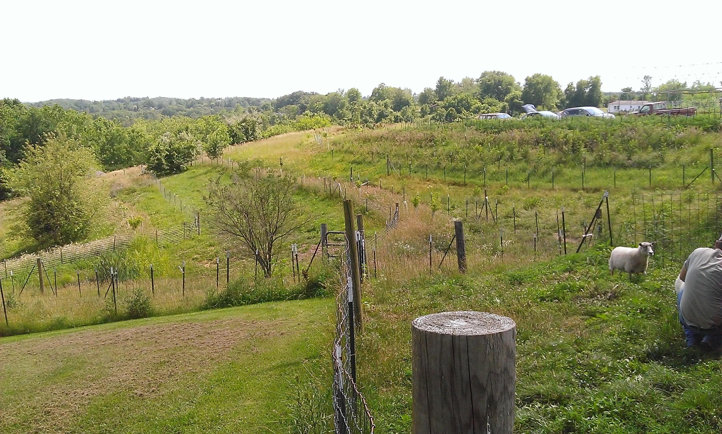 Photos:  Key Line Design: Greensleeves Farm (KY)