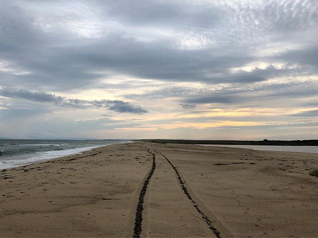 A #road to the #sunset carved in the #beach, the route darkened by #seaweed in its grooves... #marthasvineyard #indiefilm #filmsadaptedfrombooks #thereturnofthenative #mistover #themistovertale #newengland #summer #eclipse