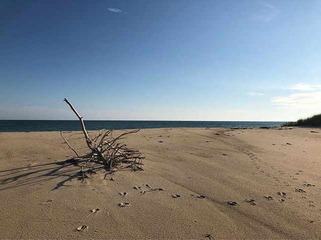#driftwood and #beach #tracks #marthasvineyard #mistover #themistovertale #natureisfate