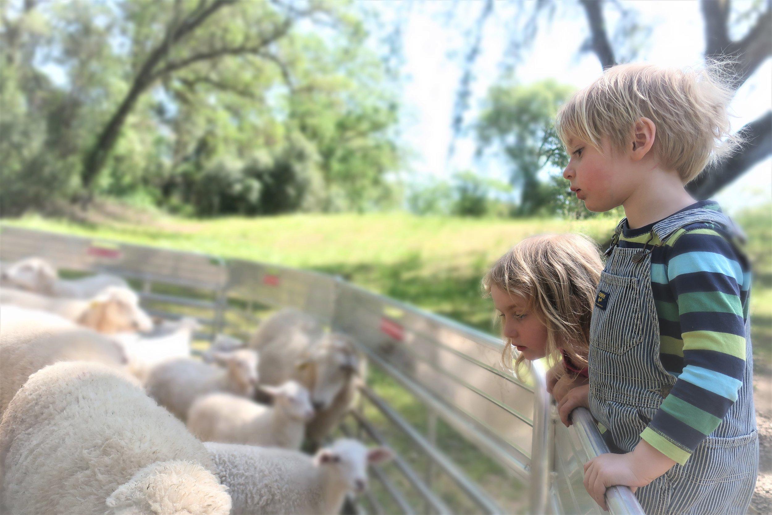 June and Walter looking at the sheep during shearing 2019.jpg