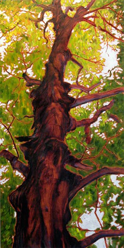 majestic tree portrait
