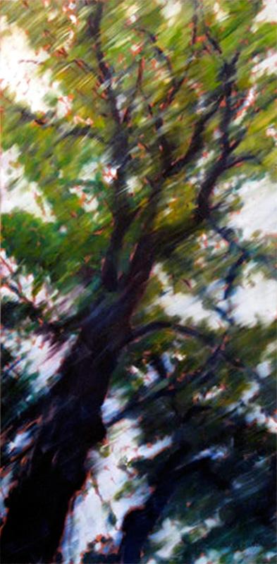 skyward tree portrait