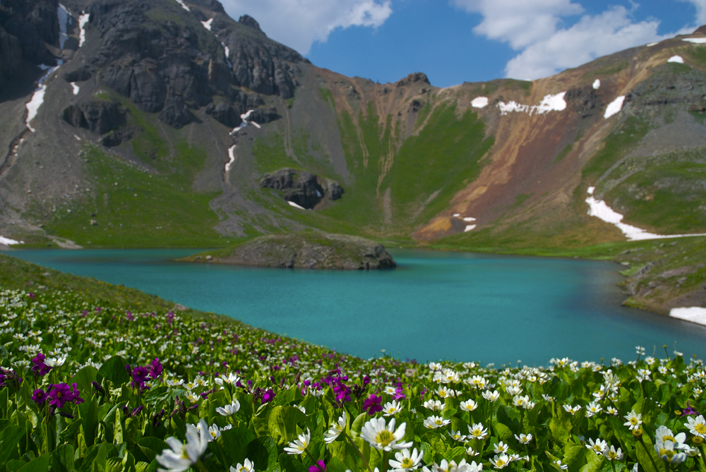 Hope Lake Flowers.jpg
