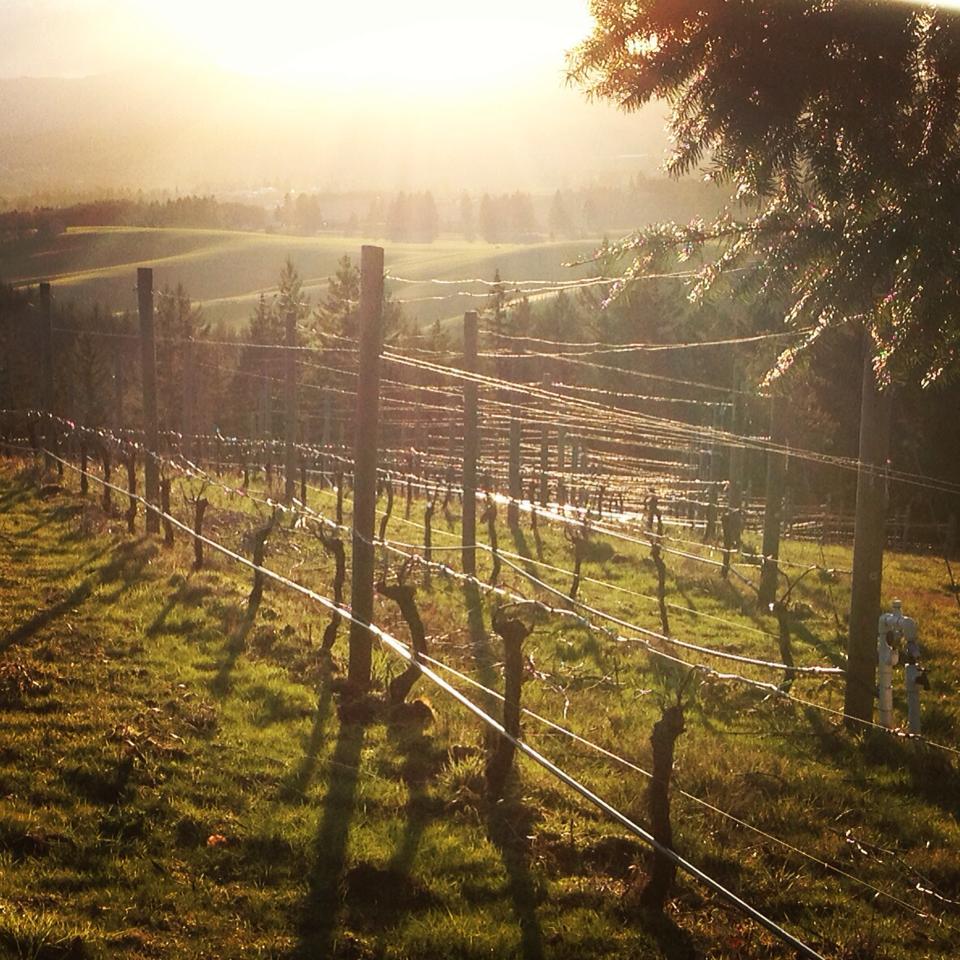 Roots Estate Vineyard, Yamhill-Carlton AVA